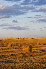 Farmers field full of hay bales
