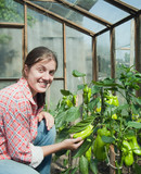 girl picking  green pepper  in the greenhouse