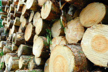 Cut log pile