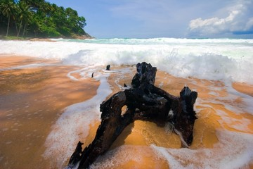 Old stump at the sand tropical beach.  Phuket. Thailand