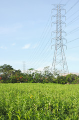 Electricity poles in the grass