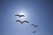 太陽光線と複数のカモメが飛ぶ