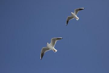 2羽のカモメと青空