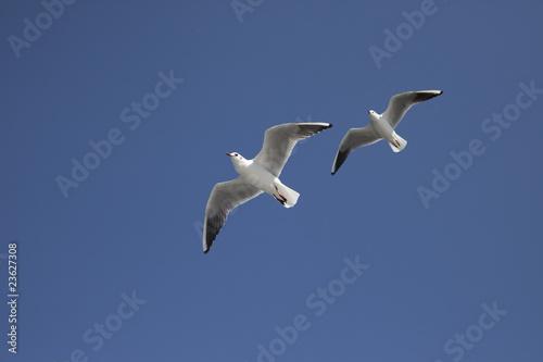 青空に2羽のカモメが飛ぶ