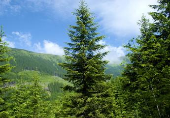 Rohace mountains, Tatra National Park, Slovakia