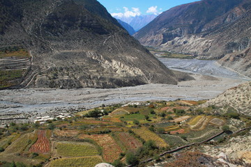 Himalaya and the Field
