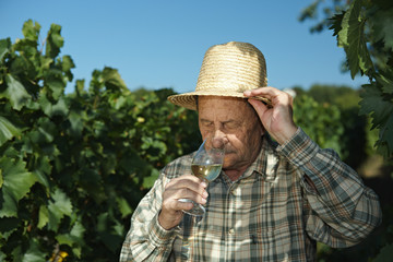 Senior winemaker testing wine