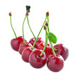 Juicy cherries isolated on white.