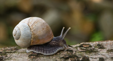 snail in nature close-up