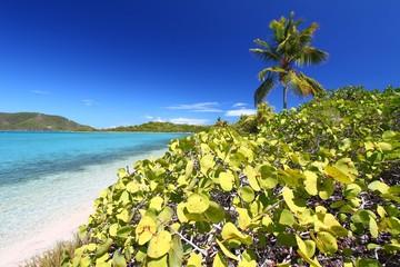 Beach of Beef Island