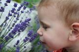 Fototapety Kind mit Lavendel