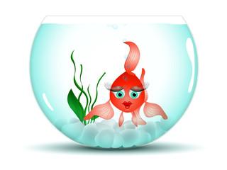 Coquette dans son aquarium