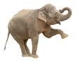 Fototapeten,indianer,elefant,weiblich,isoliert