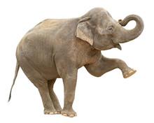 "Постер, картина, фотообои ""Indian elephant female greeting cutout"""