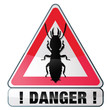 danger, risque de termites
