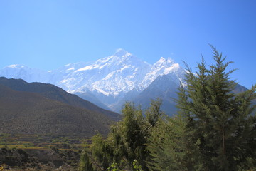 Himalaya and Tree and Blue sky