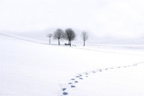 Fototapety Winterimpression