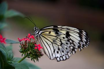Pili Palas Butterfly Farm