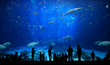 Large Aquarium - People Silhouettes - 23686327