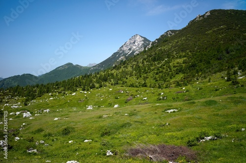 Alpine landscape with green grass
