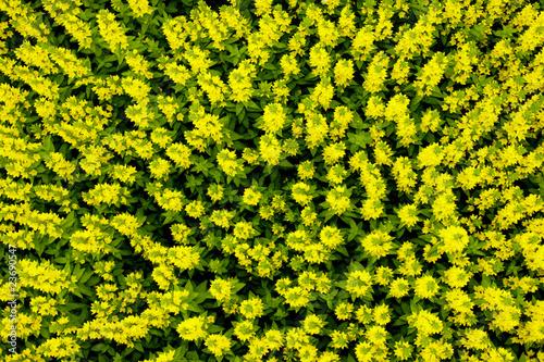Leinwandbild Motiv Blumenstauden von oben
