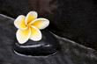 Leinwanddruck Bild Fleur de frangipanier et galet noir