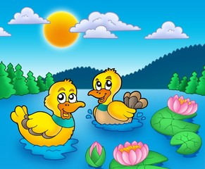Two ducks and water lillies