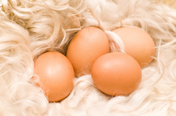 chicken eggs on fur