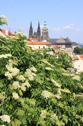 Prague's gothic Castle with flowering trees and green grass