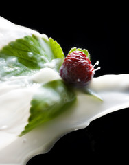 Milk splashing on strawberry
