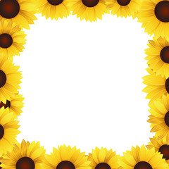 sunflowers frame blank background