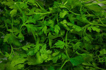 Background of green parsley leafs