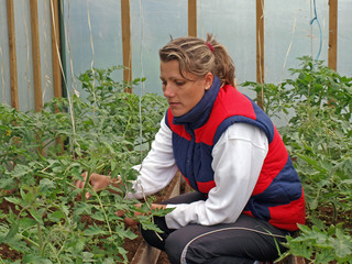 Working in greenhouse 2