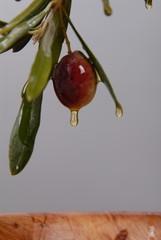 olive & oil1