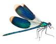 Leinwanddruck Bild - Dragonfly isolated on white