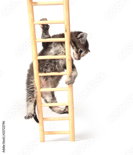 Kitten climbing ladder