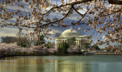 Jefferson Memorial during Cherry Blossom Festival