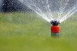 Garten wird gewässert mit Rasensprenger - 23727188