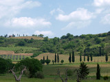 Tuscan landscape with vineyards and cypresses poster