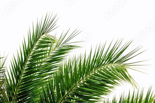Fotobehang Palm boom Palmenblätter im Wind