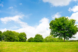 Fototapety Nature background, green grass,trees and cloudy sky