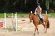 Pferde 125