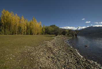 shores of lake Lacar (lake district - Argentina)