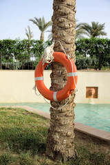 lifebuoy hanging on a tree