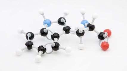 Tryptophan Amino Acid