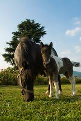 Mamma pony e Ponino