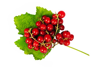 Fresh redcurrants - isolated