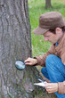 Young man attentively studies a tree bark