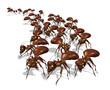 Army of Ants - 3D render