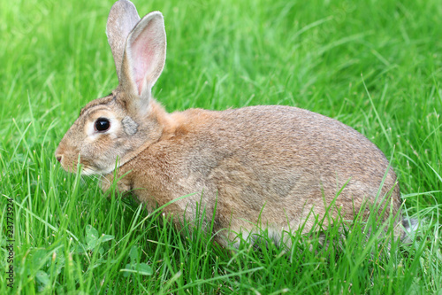 rabbit on a green grass.